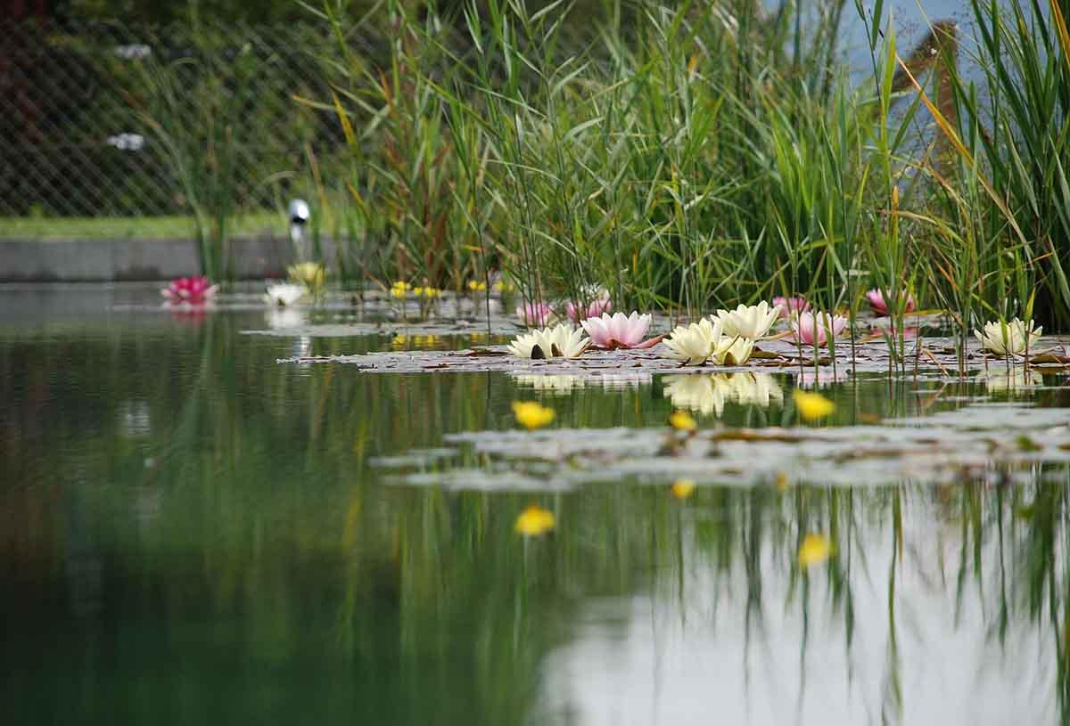 Schwimmteiche aus dem Saarland